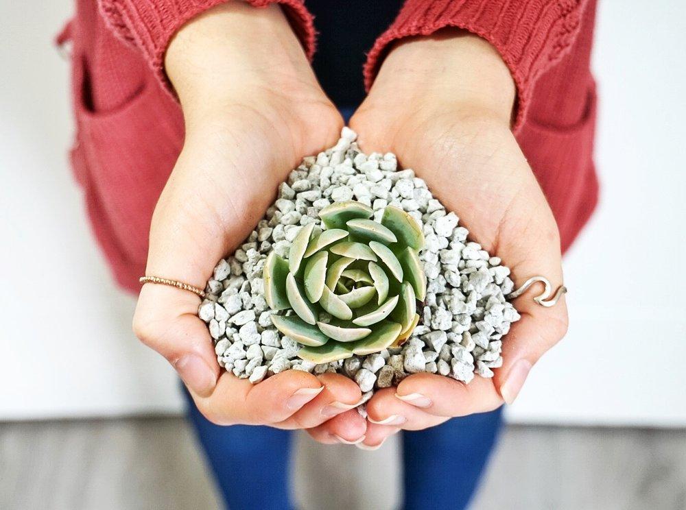 پوکه معدنی برای گیاهان